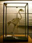 birdy: chicken skeleton