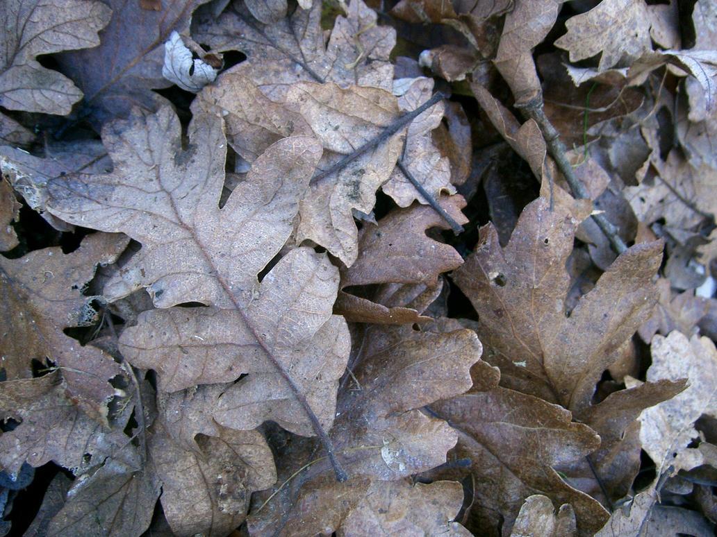 oak leaves 03 by cyborgsuzystock