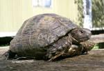 turtle 03