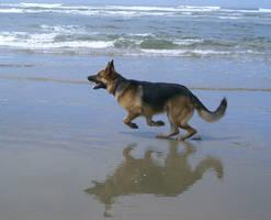 dog 13: german shepherd by cyborgsuzystock