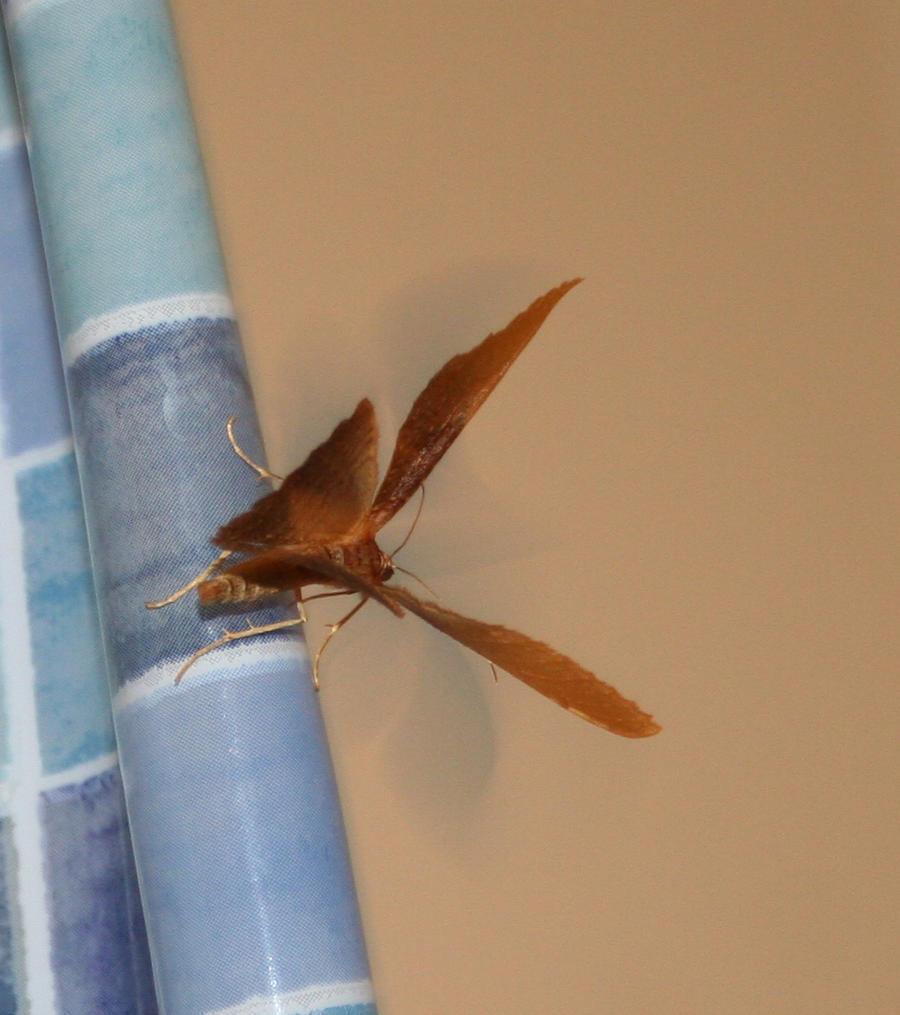 bug 22: moth by cyborgsuzystock