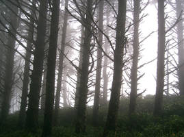 forest 30 by cyborgsuzystock