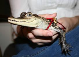 alligator 02 by cyborgsuzystock