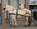 horse 32: in harness
