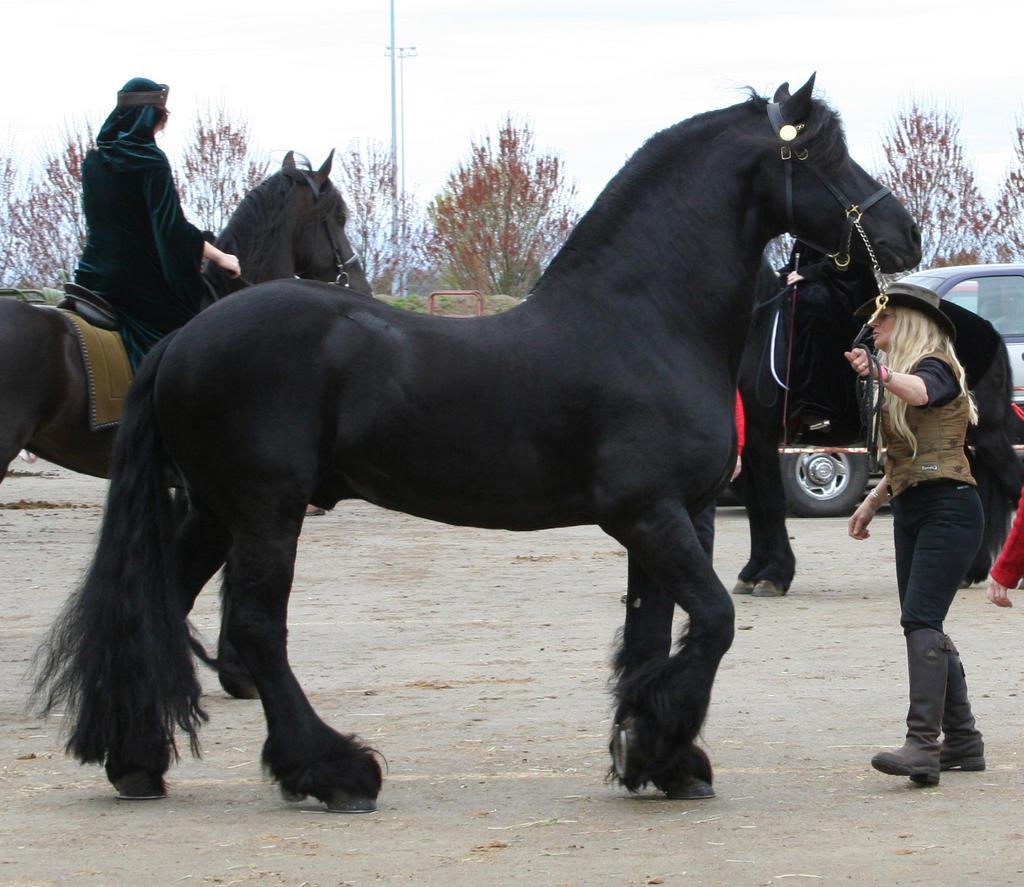 horse 36: black stallion by cyborgsuzystock