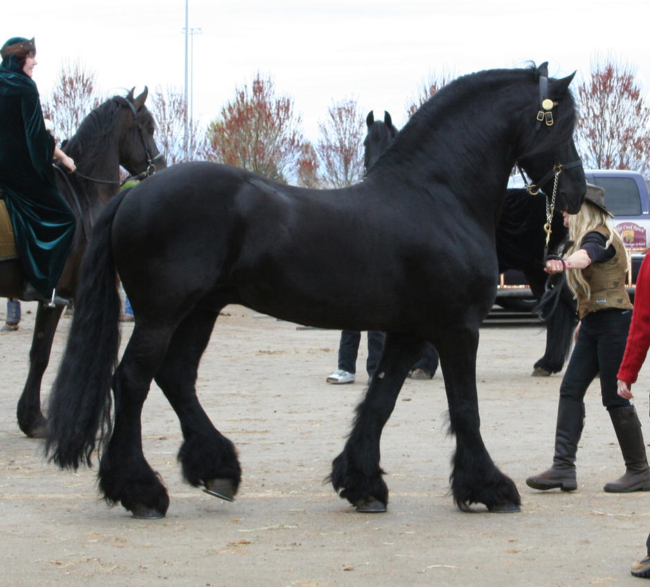 horse 37: black stallion by cyborgsuzystock
