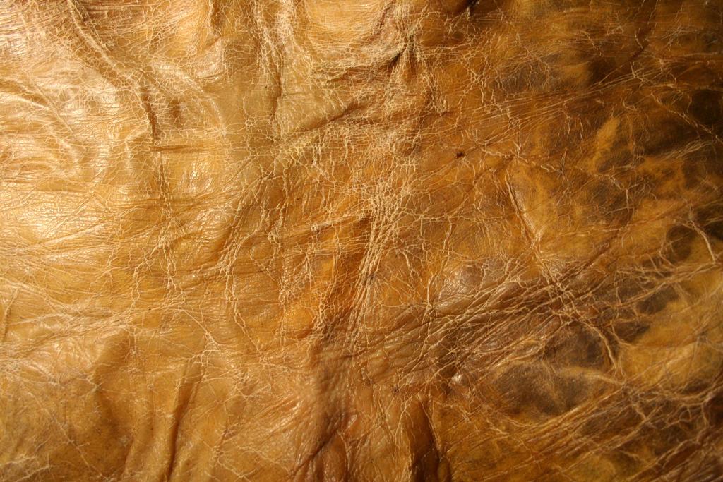 texture: leathery skin 2