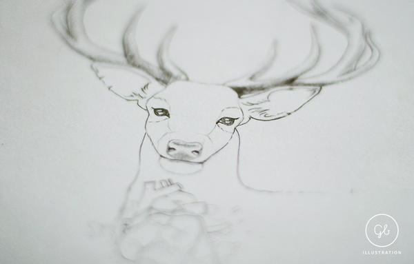 Deer sketch by gb-illustrations