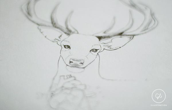 Deer sketch by gb-illustrations