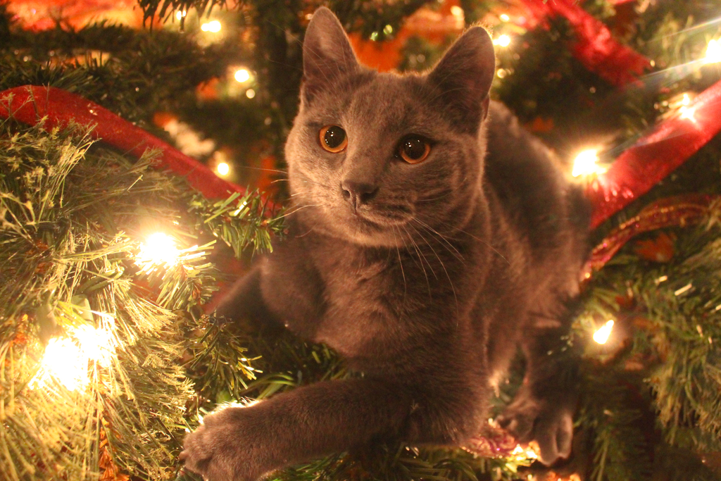 This is my Christmas tree! by Nateuhlin
