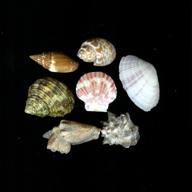 shells by oceancap