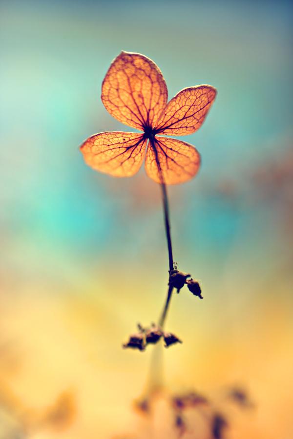 .: Sweet Dream :. by Katosu