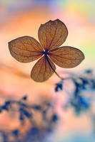 .: Sweet Dream :. II by Katosu