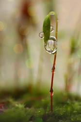 .: Moss  :. by Katosu