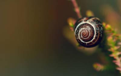 .: Shell wallpaper :. by Katosu