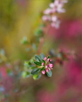 .:Pink ponk :.