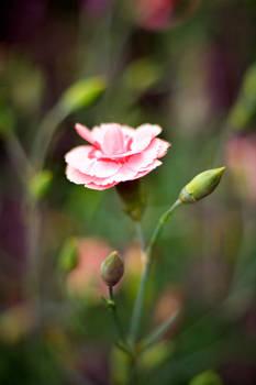 .: Flower Power :.