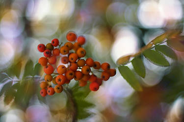 .: Colours of bokeh :.