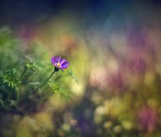 .: Hidden beauty :. by Katosu