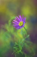 .: Hidden beauty :. II