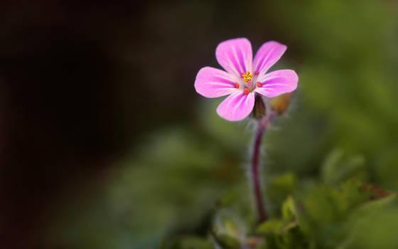 .:Flower wallpaper:.