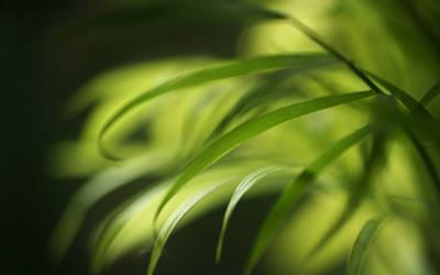 .:Soft leafs :.
