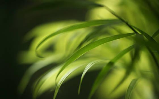 .:Soft leafs :. by Katosu