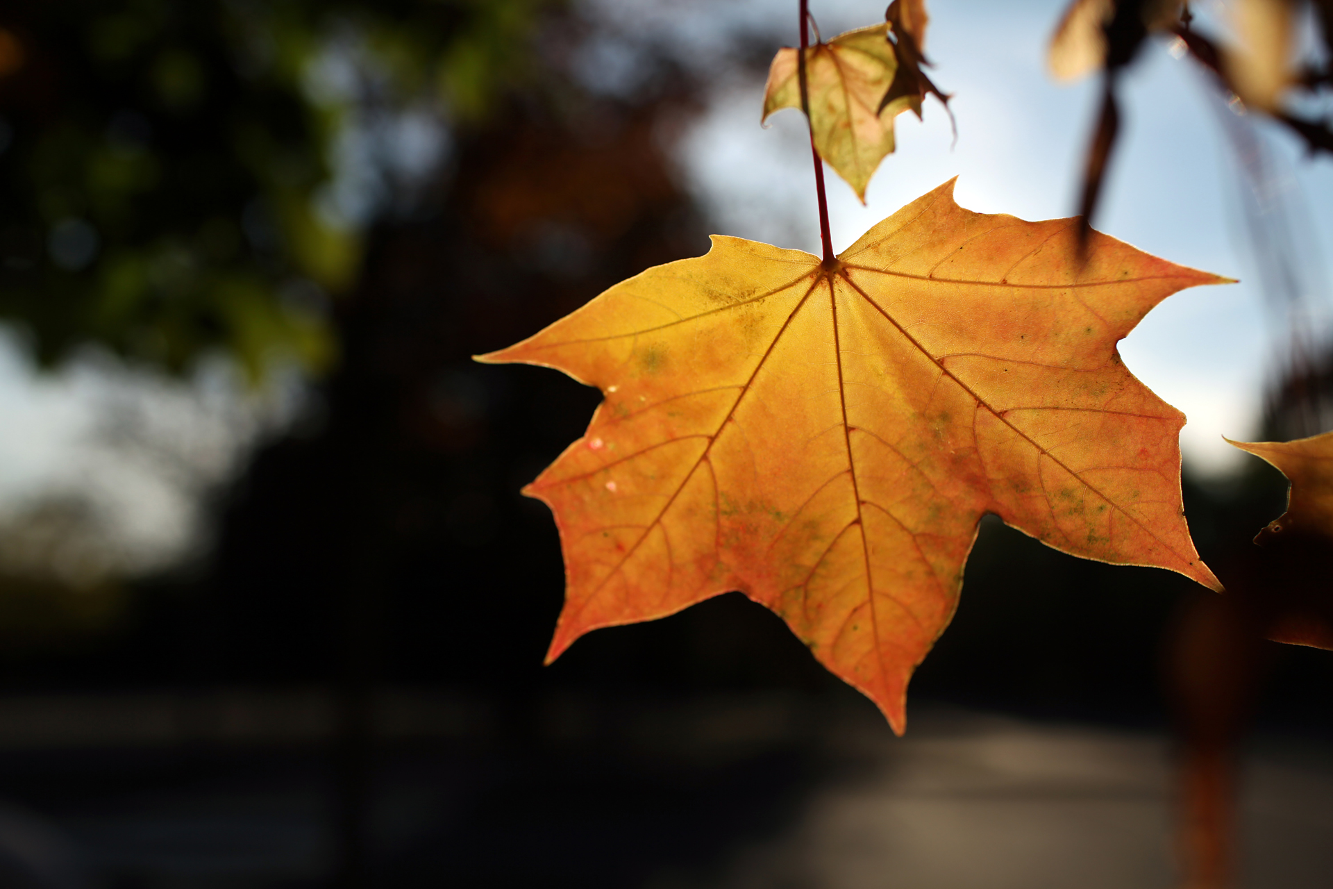 Autumn wallpaper by Katosu