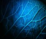 Blue leaf.