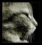 Cat III by Katosu