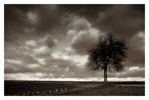 Leafless tree by Katosu