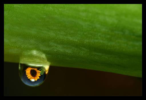 .:Sunflower:. IV