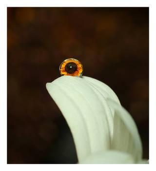 .:Sunflower:. VI