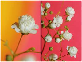 .:Girly flowers:. by Katosu