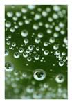 .:Clover bubbles:.