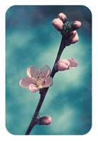 .: Peach bloosom :. I by Katosu