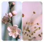 .: Peach bloosom :. II