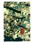 .: Butterfly :. by Katosu