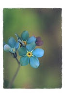 .: Forget-me-not :. III by Katosu