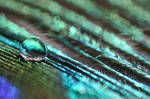.: Droplet of a peacock :.