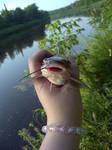 Cute cat-fishy