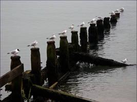 seagulls by SLavaShi