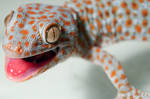 Gecko by Cooperphoto
