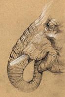 Elephant sketch by sinccolor