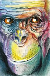 Colorful Chimp by sinccolor