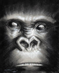 Yet another Gorilla face
