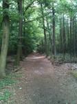 Waldweg by Dreikun