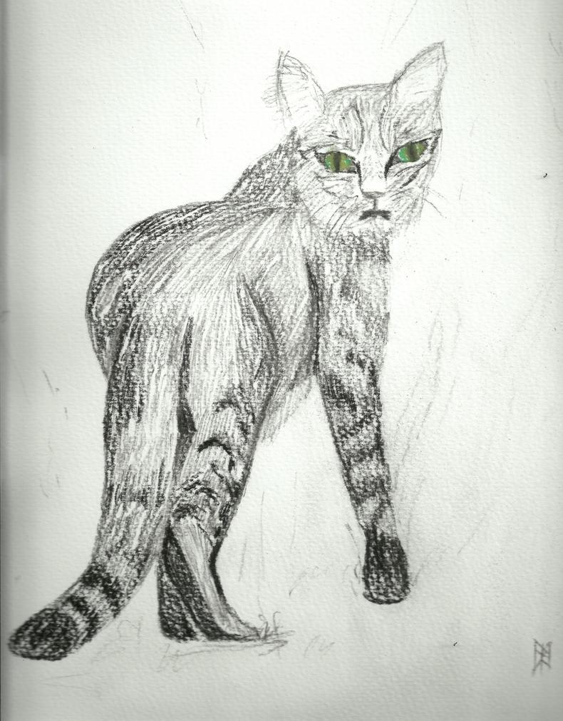 Cat by ashkara2001