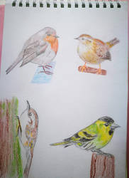 Robin, Wren, Treecreeper, Siskin