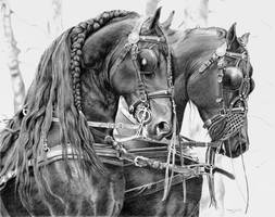 Friesian carriage horses